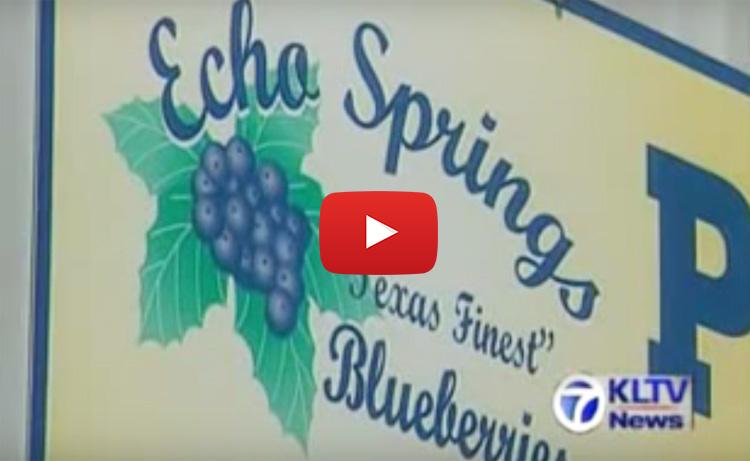 Echo Springs Blueberry Farm